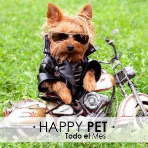 Todo Octubre | Happy Pet